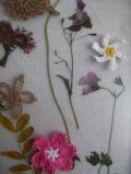 herbariumdetail